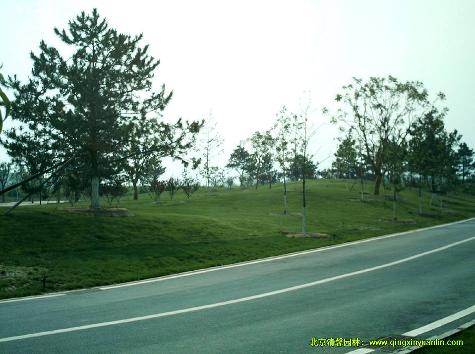 绿色生态办公区EOD