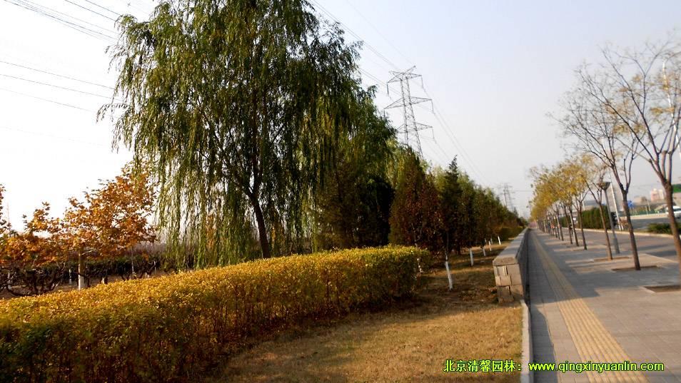 阜石路绿化工程