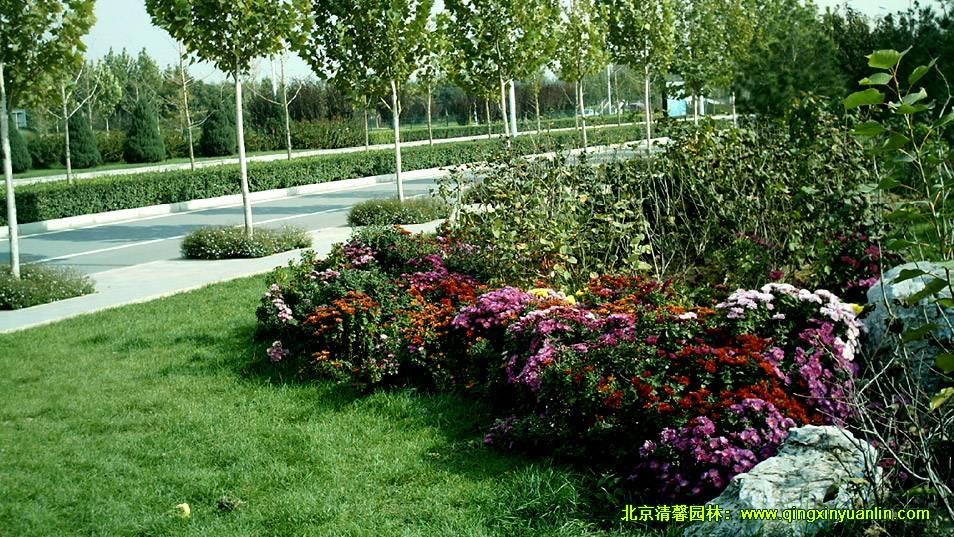旱河路绿化工程