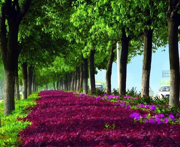 园林植物配置景观的设计技巧