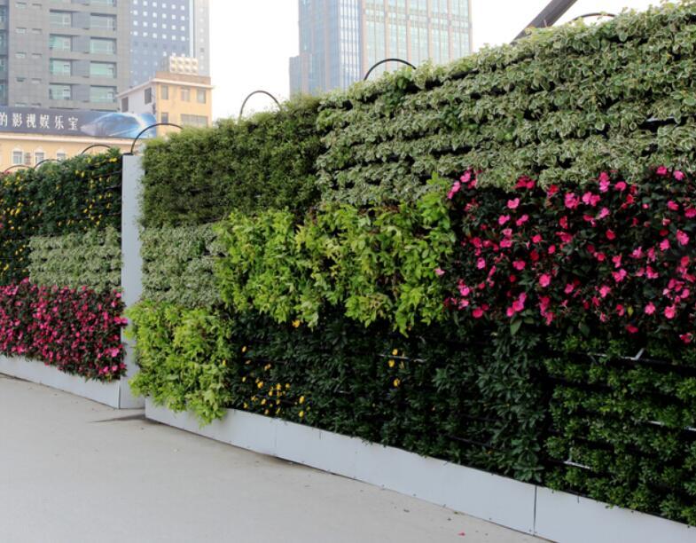 垂直绿化之墙面绿化的植物如何配置?