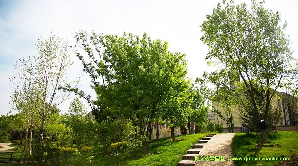 北京枫树家园 园林景观绿化
