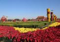 天安门广场国庆花卉布置 自主新品种首亮相