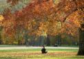 美国纽约中央公园秋叶斑斓 风景如画