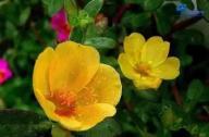盘点那些花期长又容易养的花