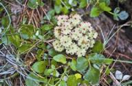 新近发现植物新记录种12种