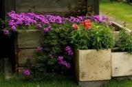 园艺疗法在国内外发展概况