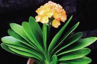 春季最适合养的室内植物