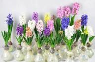 围观这些春天首选的花卉